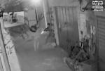 IDF shoots Saradeeh